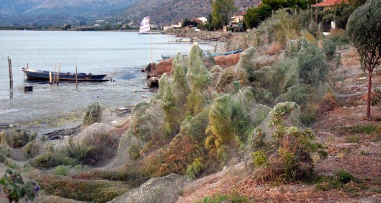 Une plage recouverte de toiles géantes [IMAGES — Araignées en Grèce