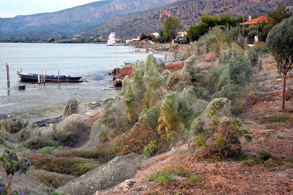 VIDÉO - Arachnophobes, s'abstenir ! Une plage grecque couverte de toiles d'araignées