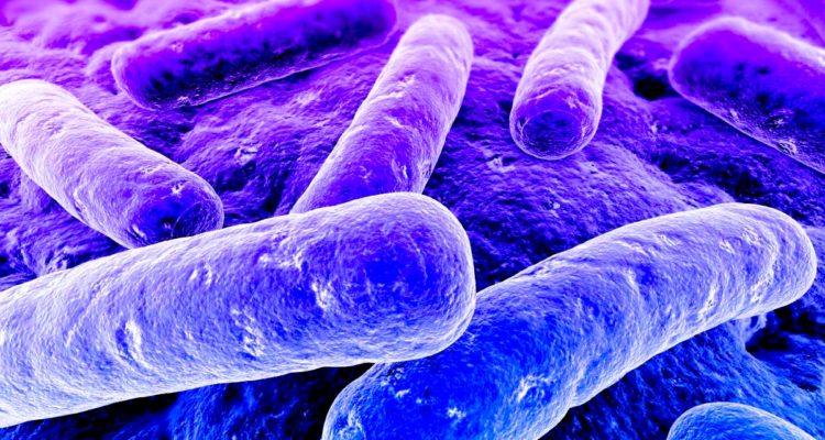 bacterie gram negatif multiresistance antibiotique