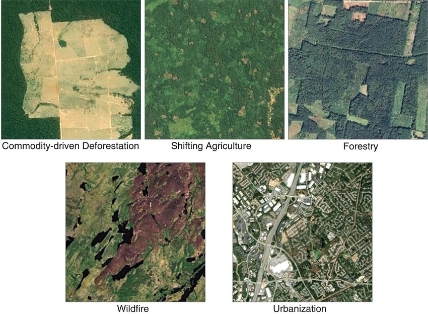 google earth causes deforestation