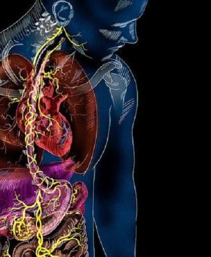 circuit neuronal intestin cerveau