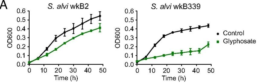 courbes croissance bactérie glyphosate