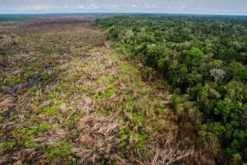 deforestation agriculture industrielle