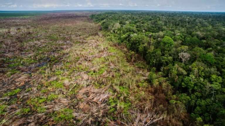 deforestation agriculture industrielle