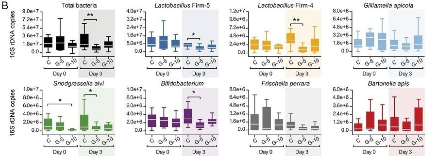 graphiques evolution microbiome abeilles