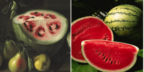 fruits ancetres domestication