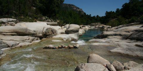 riviere de Cavu schistosome hybride bilharziose