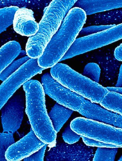 enchevêtrement quantique bacteries photosynthetique