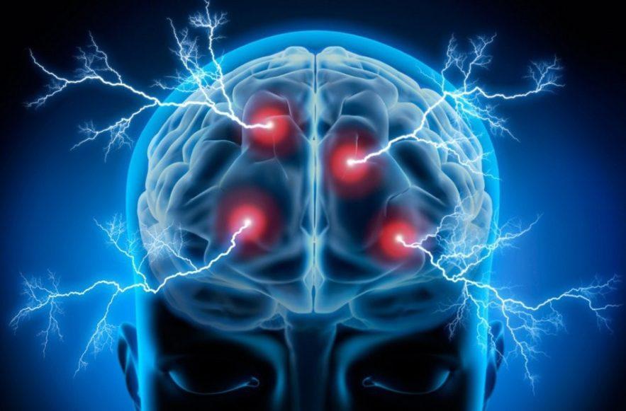 cerveau cellules communication brainnet