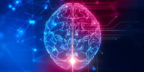 cerveau psychologie traits-obscurs personnalité recherche