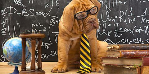 chiens comprehension langage