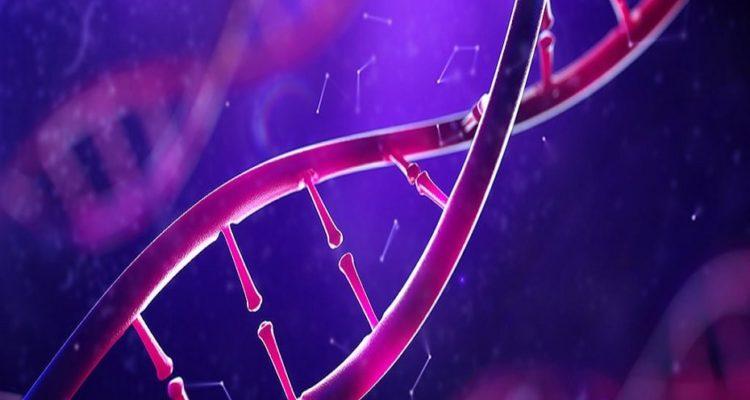 epigenetique intelligence environnement qi
