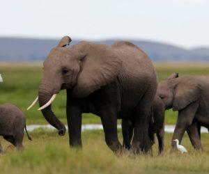 extinction mammiferes biodiversite elephant