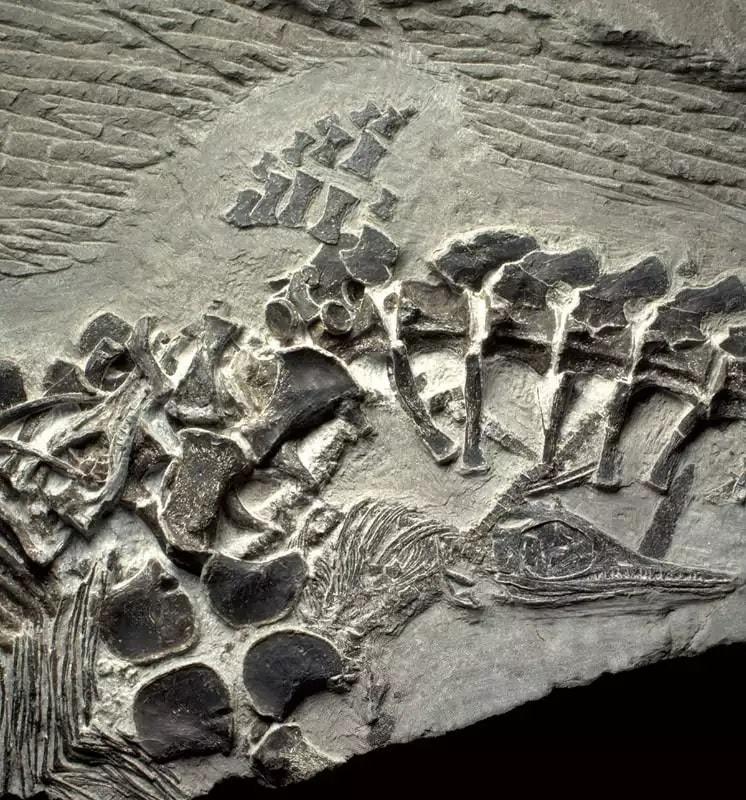argon de potassium datant de l'évolution humaine