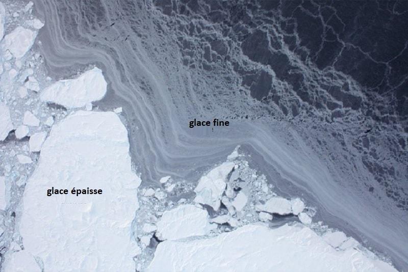 glace banquise arctique