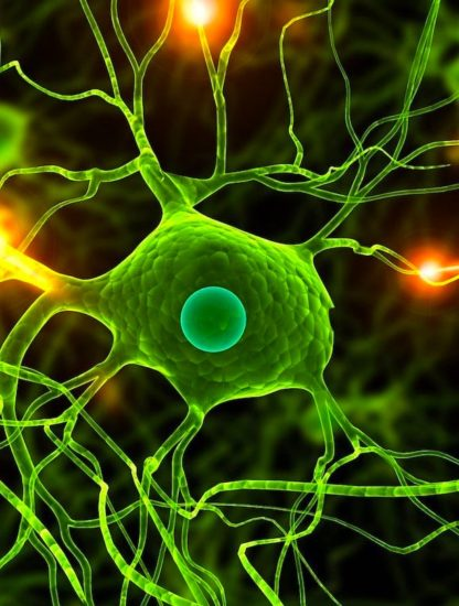 neurone structure humain