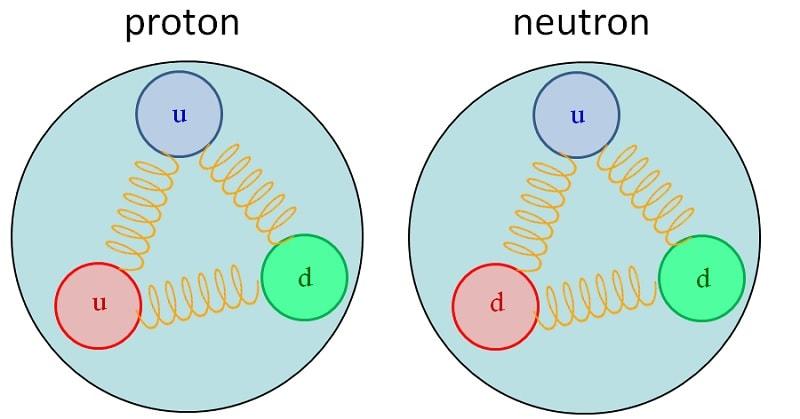 proton neutron quarks gluons