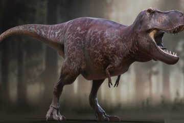 reconstruction dinosaure trex