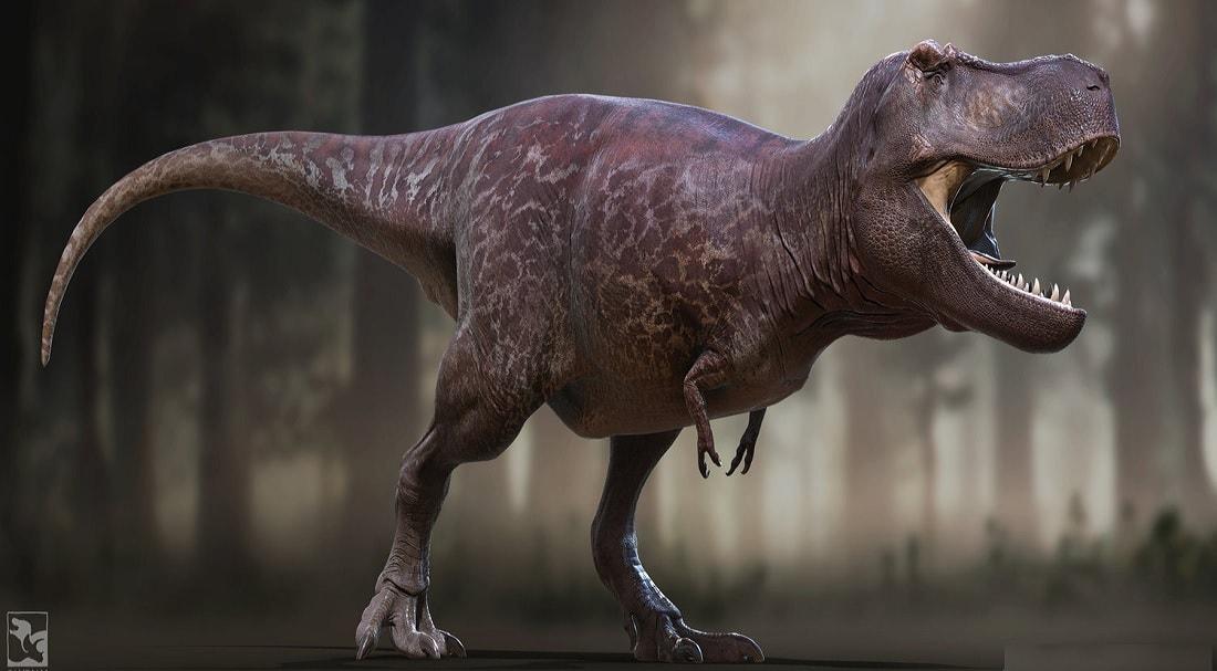 reconstruction dinosaure trex