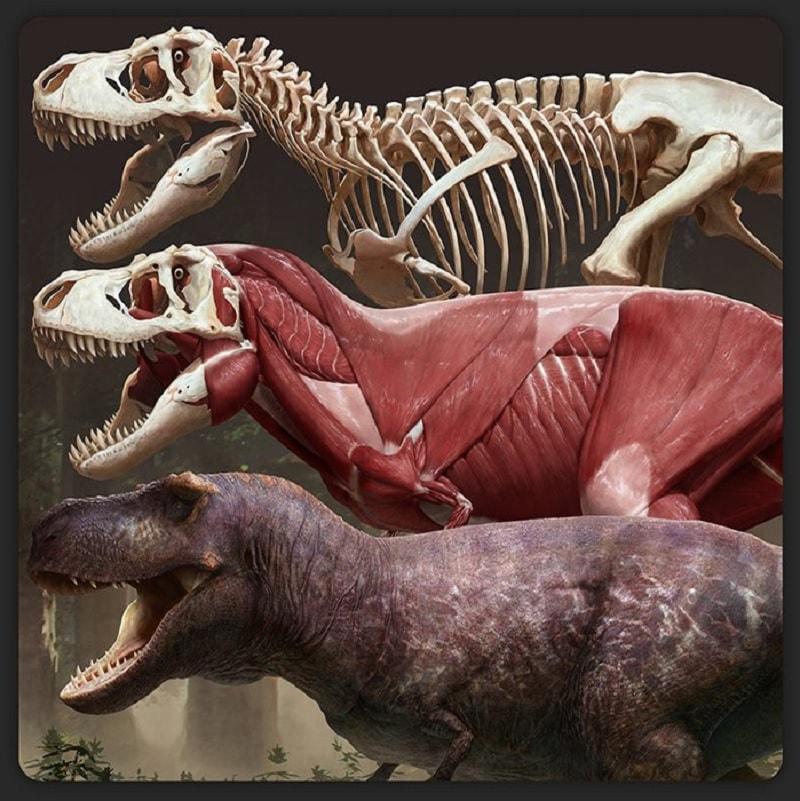 image trex squelette muscle peau