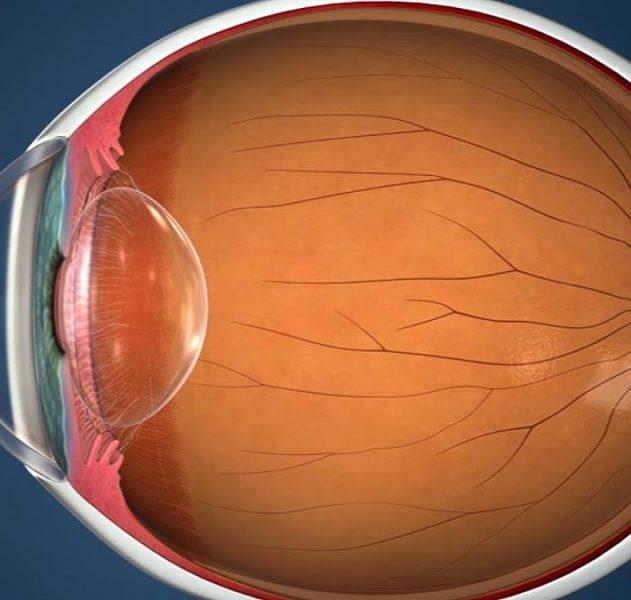 retine organoide laboratoire oeil