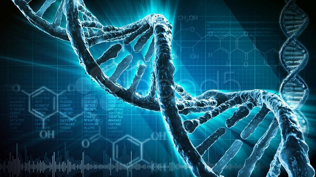 synthese enzymatique adn
