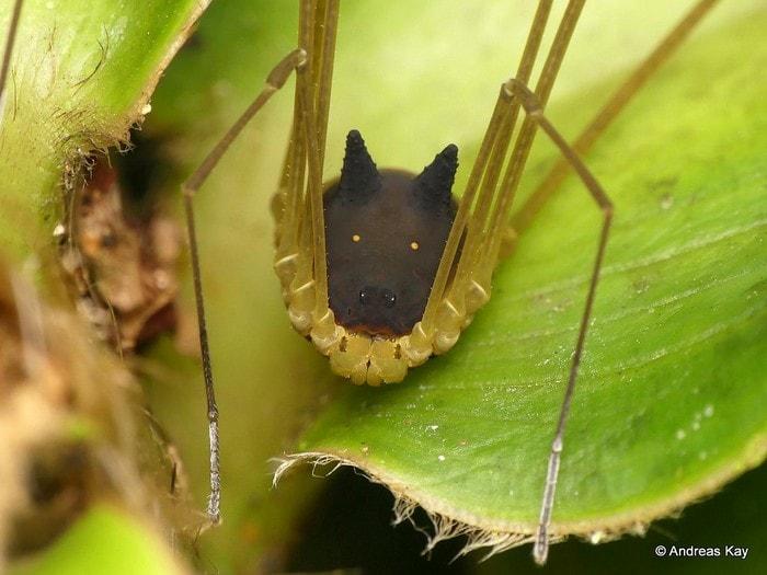 araignee arachnide tete lapin noir etrange particulier creature