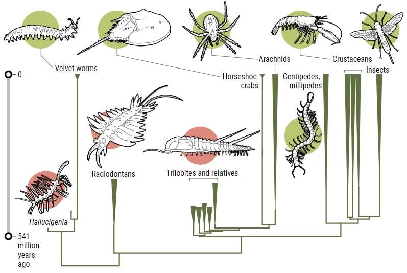 arbre famille arthropodes