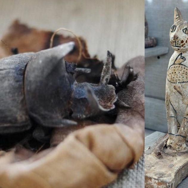 decouver sarcophage tombe egypte egyptienne chat scarabee momie