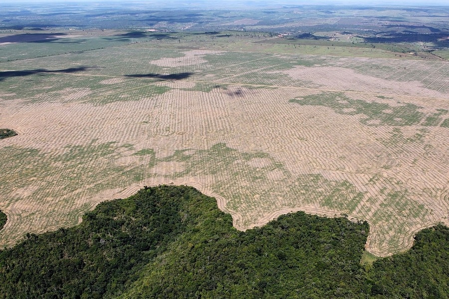 deforestation agriculture foret amazonienne