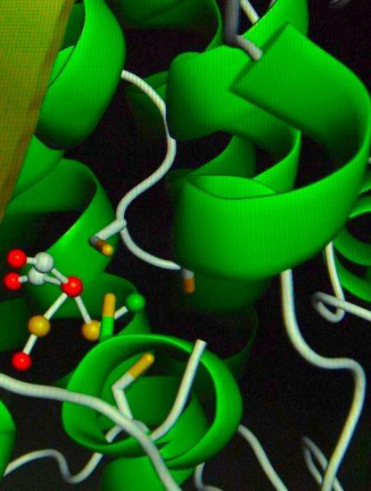 enzyme contrôle distance