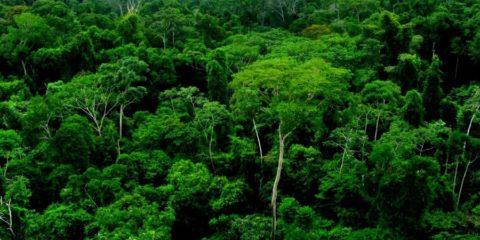 foret amazonienne poumon planete
