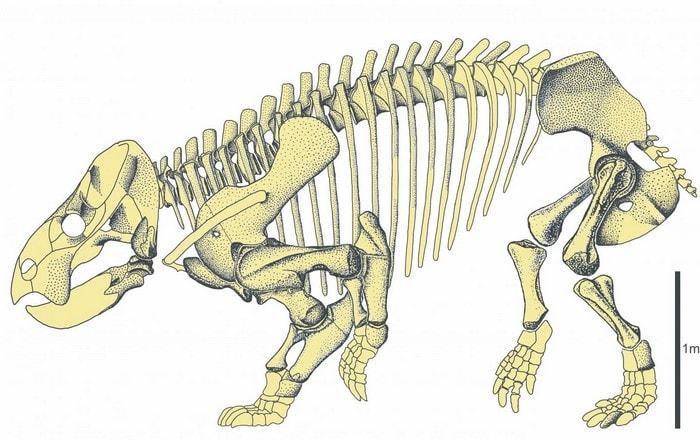 mammifere geant cousin etre humain reptile