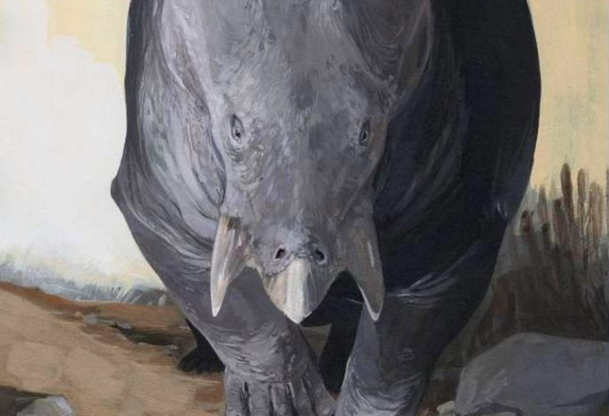 mammifere herbivore geant decouverte animal cousin humain