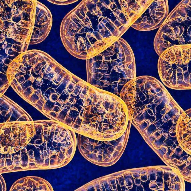 mitochondries paternel maternel heteroplasmie