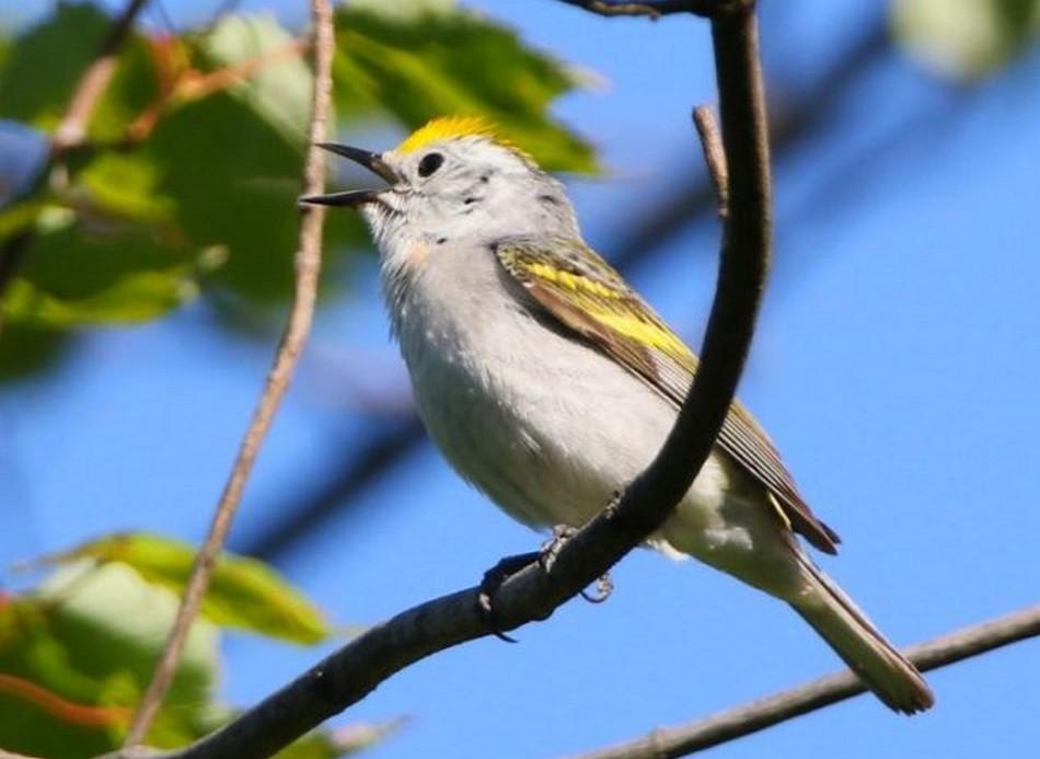 Rare : découverte d'un oiseau né de l'hybridation de 3 espèces différentes @TrustMyScience