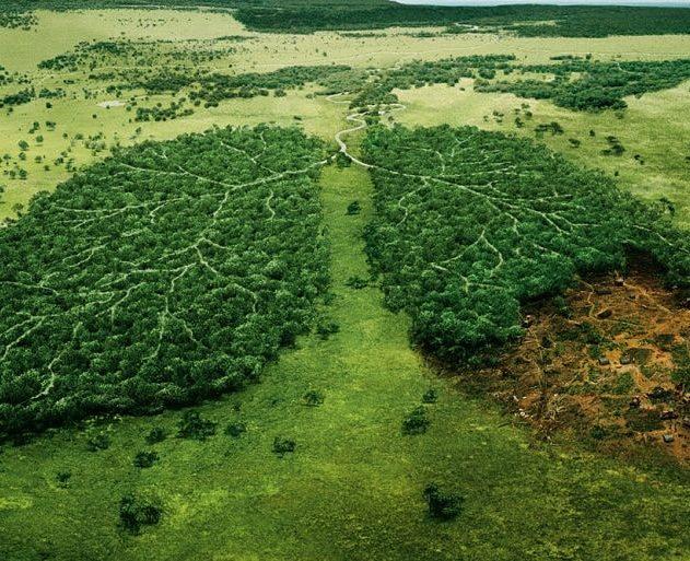 president bresilien foret amazonienne