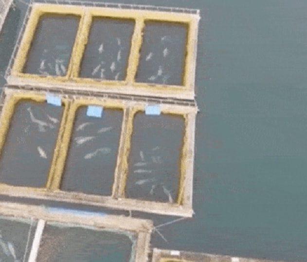 prison baleines orques russie