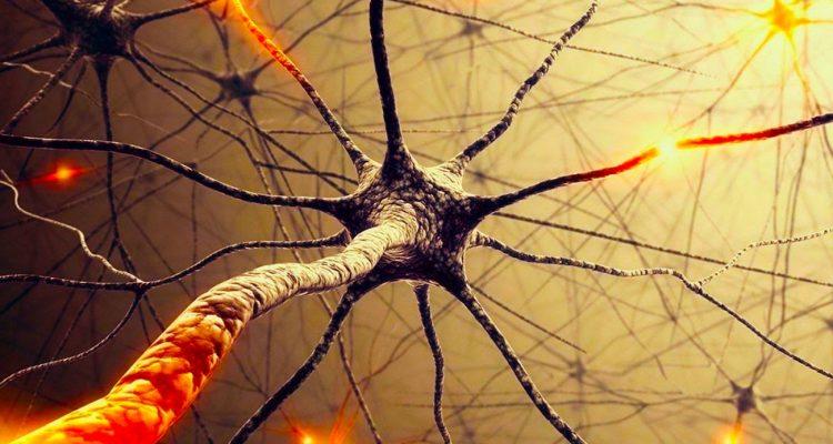 reseau neuronal reconfiguration dynamique
