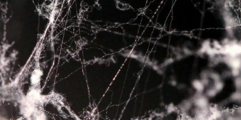 soie araignee microfibres acier