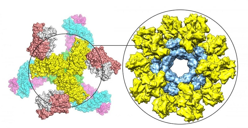 trimere proteine env