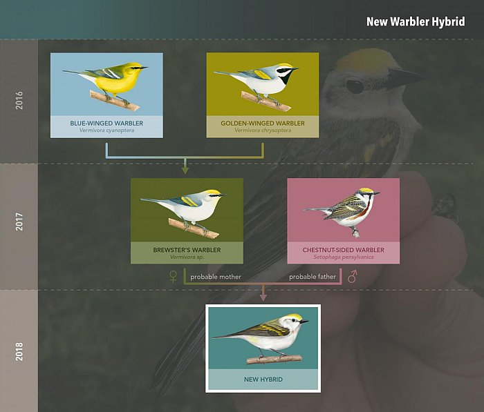 triple oiseau hybride