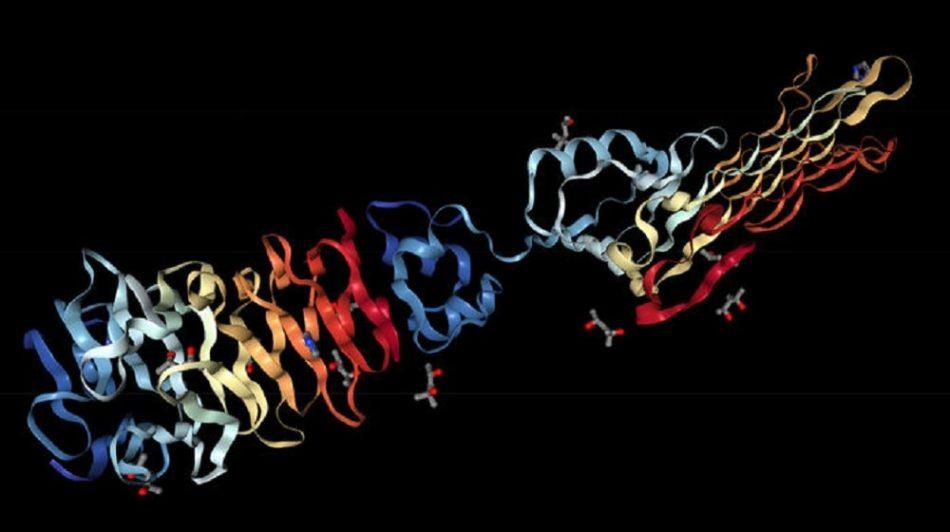 alphafold structure proteine