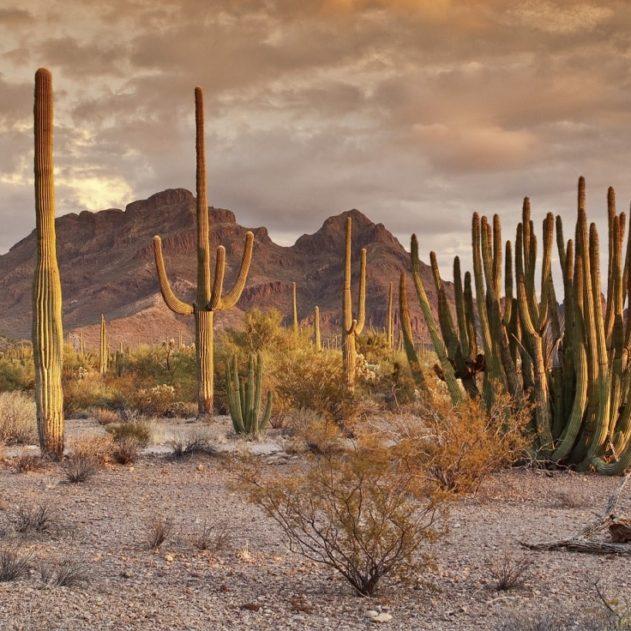 cactus eau desert