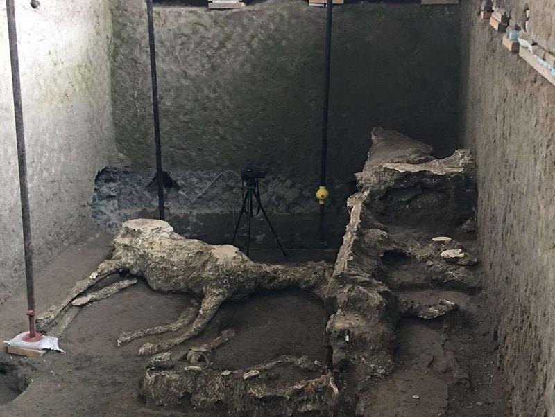chevaux ecurie pompei