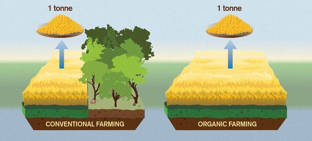 deforestation agriculture biologique