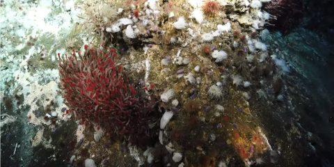 ecosysteme fonds marins