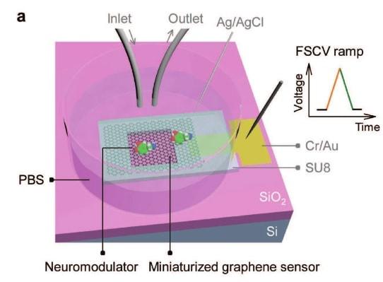 electrode capteur graphene