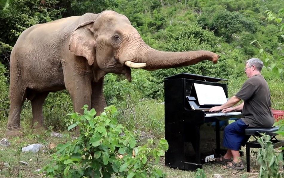elephant animal animaux faune pianiste piano