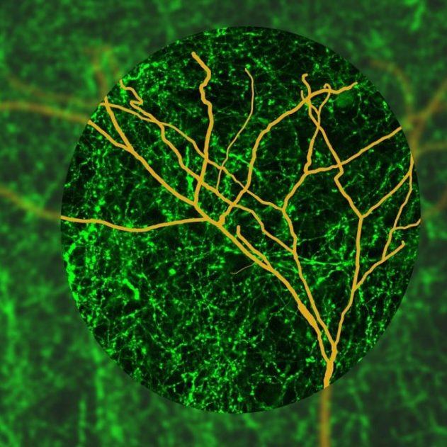 focalisation attention cerveau